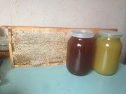 Мед натуральный,  прополис