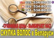 Продать волосы в Могилеве