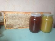 мед,  прополис,  мед в сотах,  воск